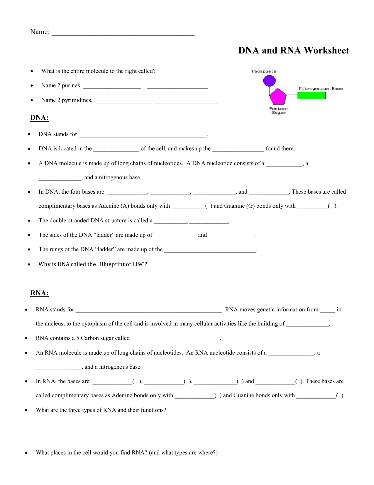 DNA:RNA worksheet Within Dna And Rna Worksheet Answers